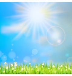 Summer grass in sun light eps 10 vector