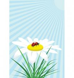 ladybug on camomile vector image vector image