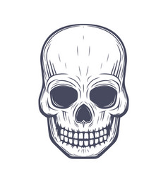 Skull front view over white vector