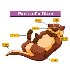 Diagram showing parts of otter vector