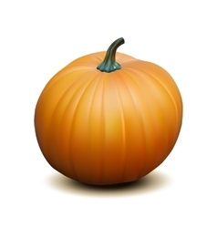 Orange realistic pumpkin vector