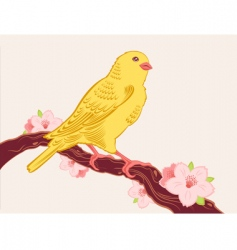 canary bird vector image