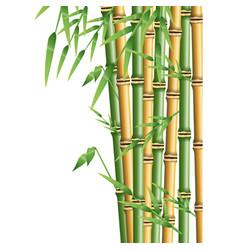Fresh bamboo leaves border botanical zen forest vector