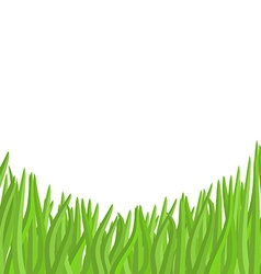Green grass on a white background garden vector image vector image