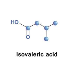 methylbutanoic isovaleric acid vector image