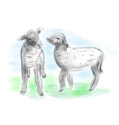 Lambs vector