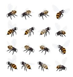 Honey bee set on white background Flat 3d vector image