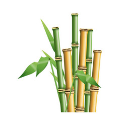 Fresh bamboo leaves border botanical zen forest vector