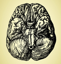 Old time hand drawn brain vector