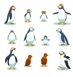 Penguins characters in various poses set vector image vector image