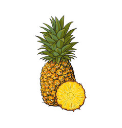 whole unpeeled uncut vertical pineapple and vector image vector image