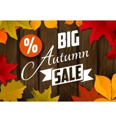 Big autumn sale Autumn leaves vector image