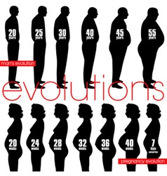 men obesity evolution and pregnancy stages vector image vector image
