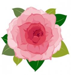 soft flower petals closeup vector image vector image
