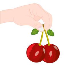 Berry cherry in hand vector