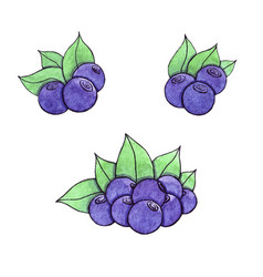 Hand drawn watercolor blueberry isolated on the vector