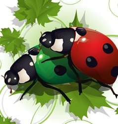 Beetle pair vector
