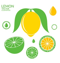 Lemon Lime vector image