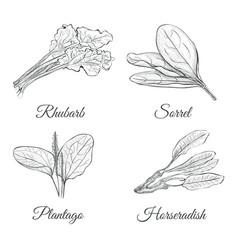 Set of plants sketch vector