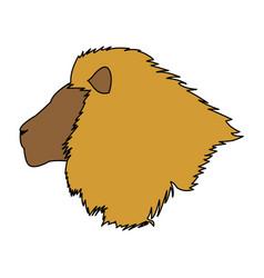 head big lion african powerful fierce vector image