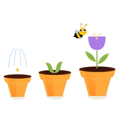 Flower in pots growth stages isolated on white vector image