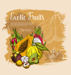 Sketch poster exotic tropical fresh fruits vector