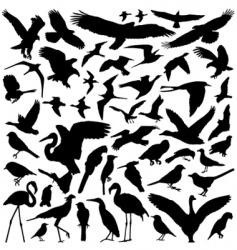 bird set vector image vector image