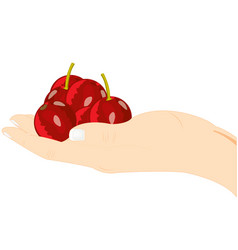 Berries cherry on palm vector