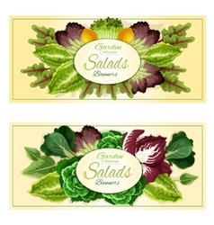 Fresh leaf vegetables and salad greens banners set vector