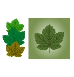Maple leaf background vector image vector image