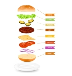 Realistic hamburger layers infographics vector