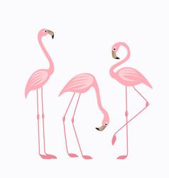Tropical bird flamingos vector