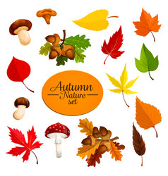 Autumn falling leaf forest mushrooms set vector