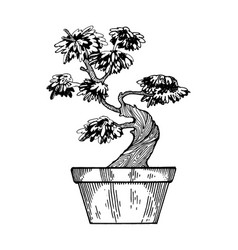 Bonsai tree engraving vector