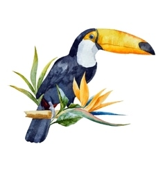 Watercolor toucan vector image