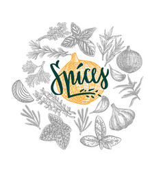 Hand drawn natural spices round concept vector