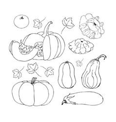 sketch pumpkin doodle pumpkins hand drawn vector image