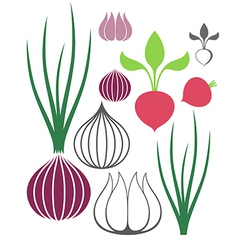 Vegetable garlic onion radish vector