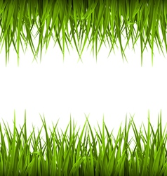 Green grass like frame isolated on white floral vector