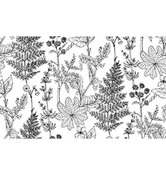 Seamless pattern of herbs and flowers vector image vector image