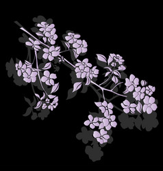 Twig apple-tree blossoms vector