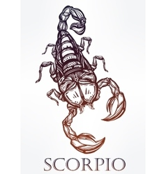 Hand drawn scorpion symbol of scorpio vector
