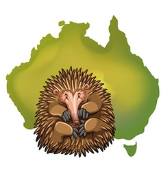 Echidna and australia map vector