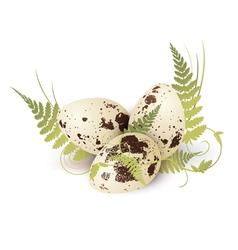 Quail eggs vector