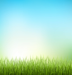 Green grass lawn with sunrise on sky floral nature vector