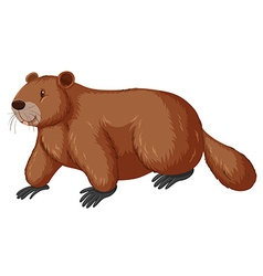 Beaver with happy face vector
