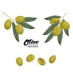 cartoon olives ripe green vegetable vegetarian vector image