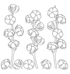 With cotton branches vector