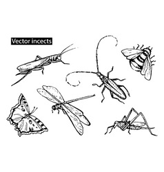 Insects sketch decorative icons set with dragonfly vector