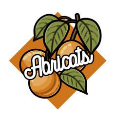 color vintage fruits emblem vector image vector image